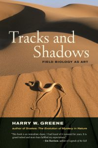 tracks_shadows