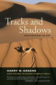 tracks_shadows